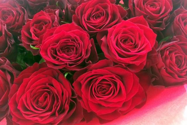睡眠中の記憶力をパワーアップさせるバラの香りとは?